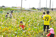 JA兵庫南と共同開発 まるっともろこし稲美ツアーを開催のサムネイル