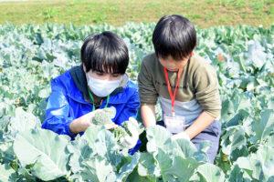 例年とは違う大変さも、参加者の笑顔で達成感に! 『冬野菜収穫体験 in 稲美町』開催