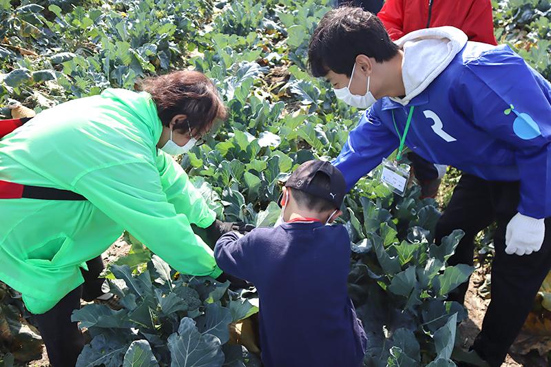 冬野菜収穫体験 in 稲美町